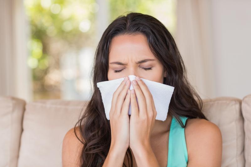brzoza alergia